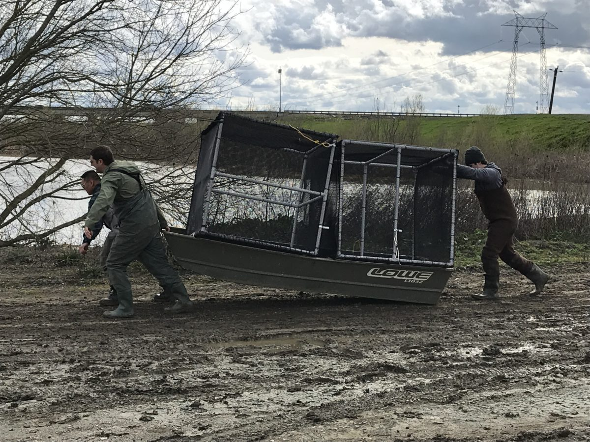 UC Davis researchers taking cages, loaded onto a boat