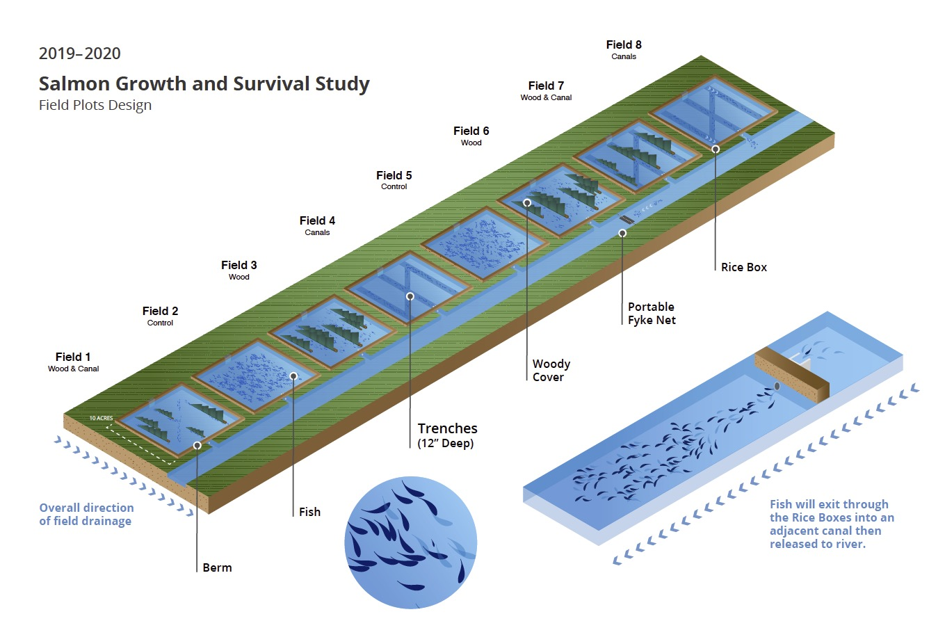 Salmon growth and survival study diagram