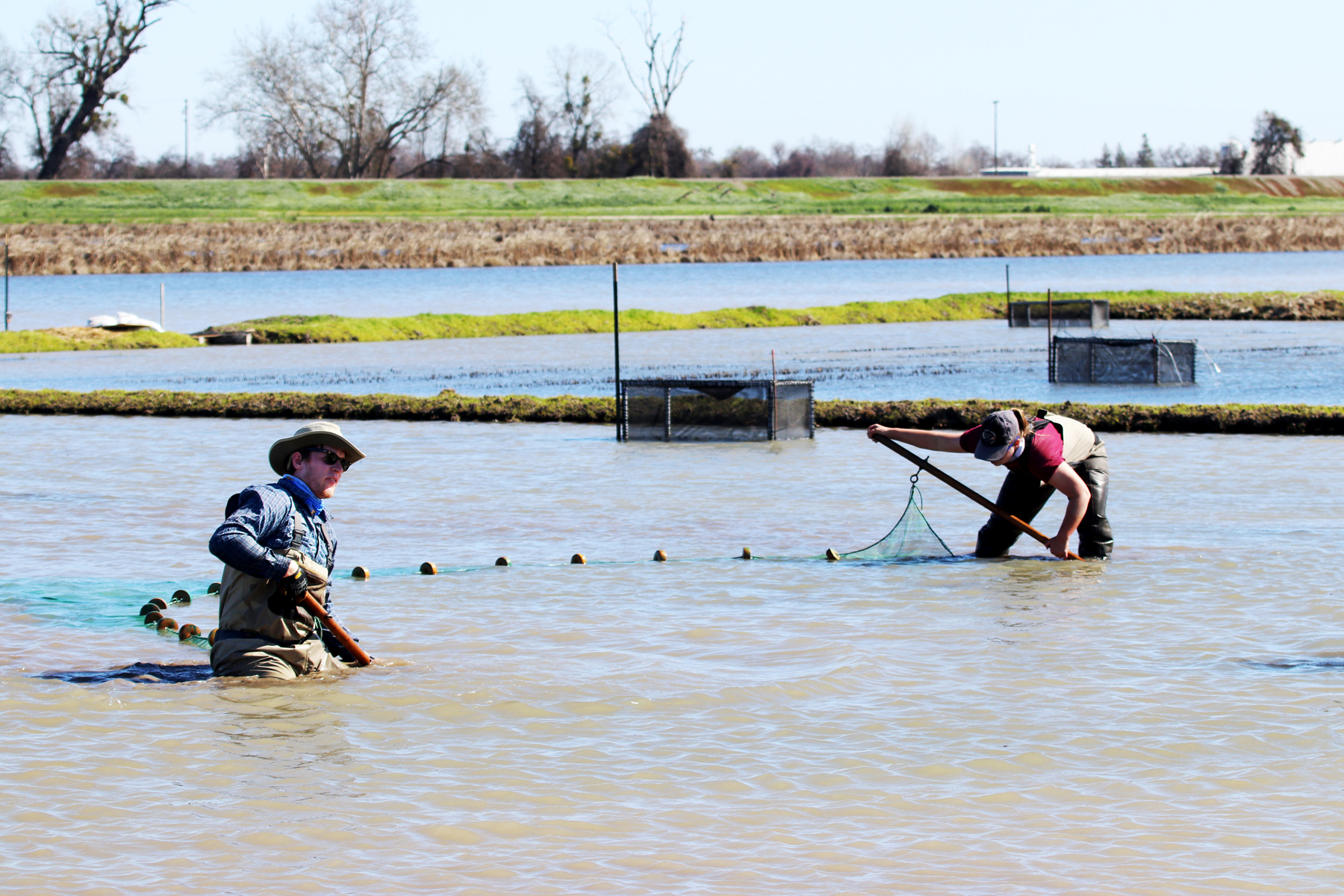 Jordan Colby and Alexandra Wampler (UC Davis) work together on seining efforts to gather the baby salmon.